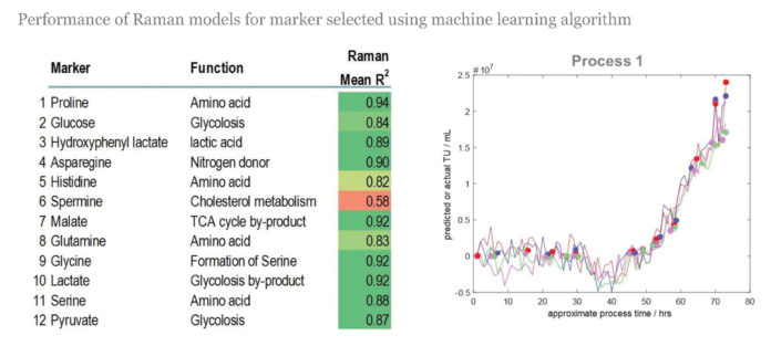 Scientists at the Cell and Gene Therapy Catapult selected 12 metabolite markers and developed Raman spectroscopy models to enhance the monitoring of cell culture during product manufacture. Ultimately, through the application of advanced process analytical technology, real-time monitoring should enable dynamic feedback control of bioprocessing.